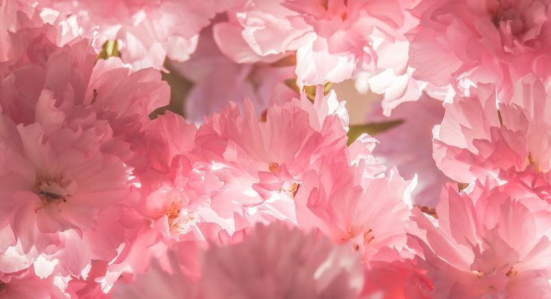 Pink Spring di Justinawind