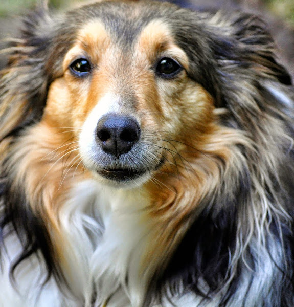 Photo: Bailey, eyes full of love