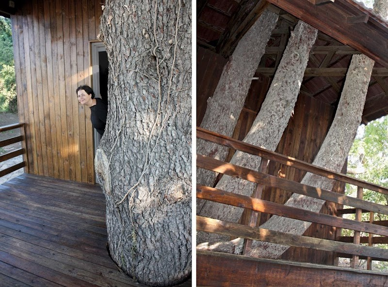 Two-Tree House - Golany Architects