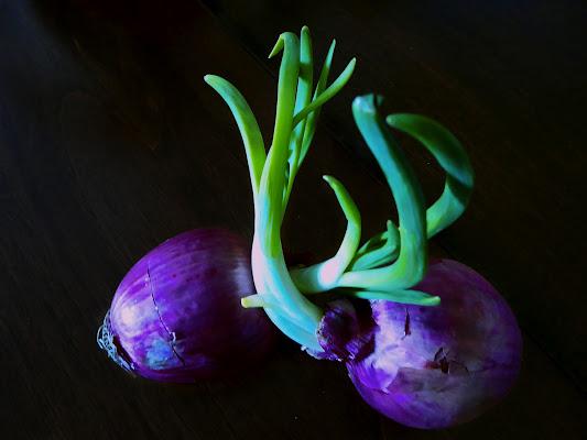 Green & Purple di luiker