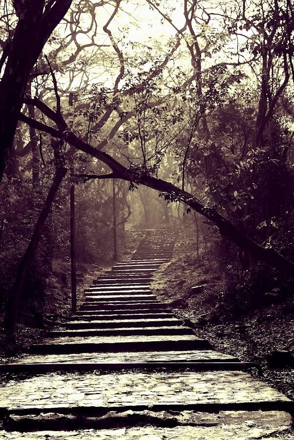 by Rajarshi Gupta - Landscapes Mountains & Hills