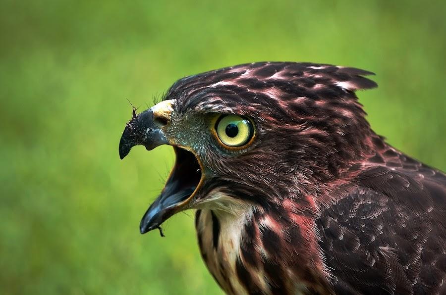 by Sudirman Sie - Animals Birds (  )