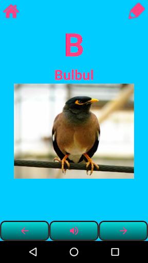A to Z Birds Name
