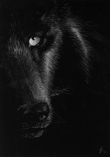 Best Cool Wolf Wallpapers Apk Download Apkpure Co