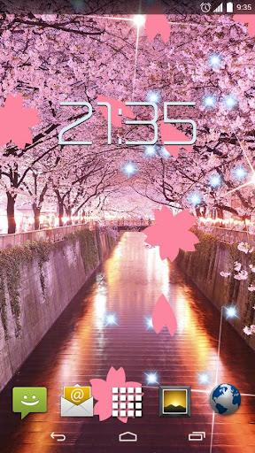 Japanese Sakura Flowers HD LW