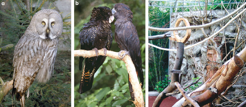 A selection of branches and other natural perches to exercise the feet is a must in exhibits for wild species