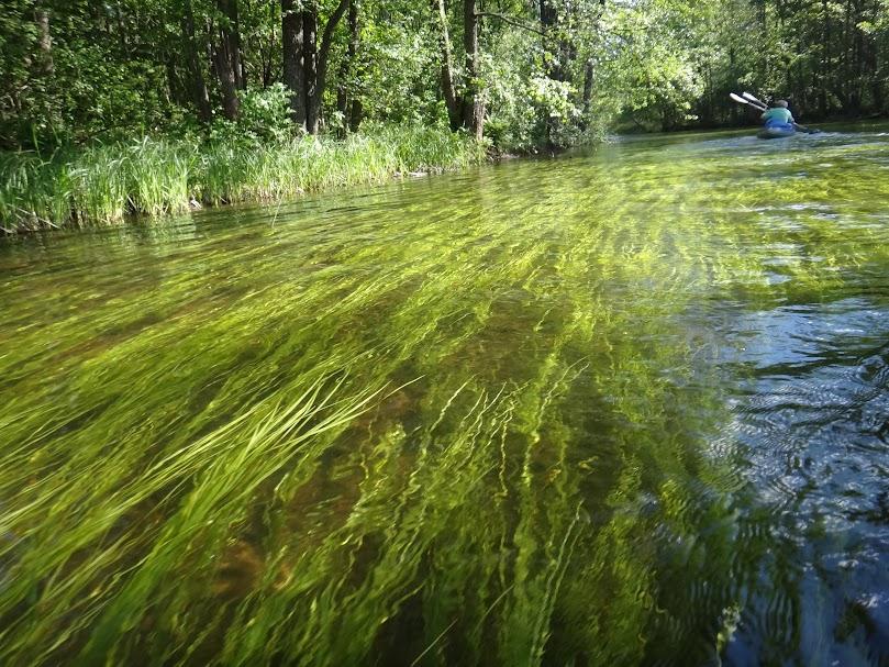река с водорослями