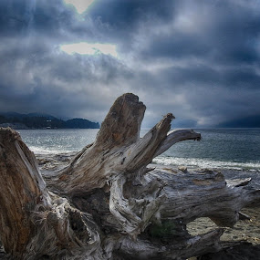by Brenda Baird - Landscapes Beaches