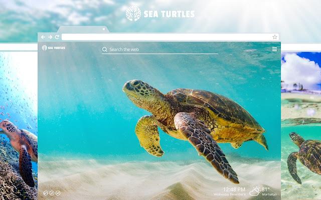 Sea Turtles Marine Tortoise Hd Wallpapers