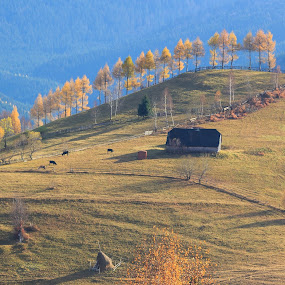 Quiet  by George Marcu - Landscapes Mountains & Hills ( mountains, farm house, romaina, magura, cow, forest, morning, brasov,  )
