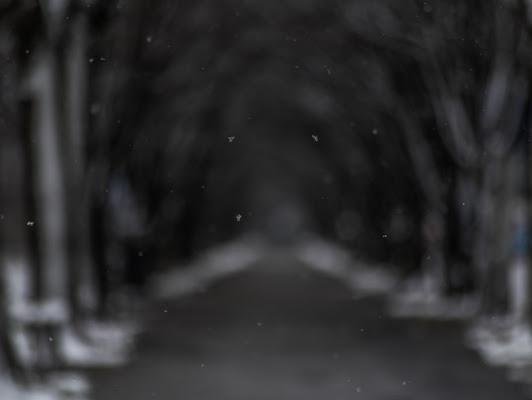 Come neve.. di Ilaria_tuccio_photo