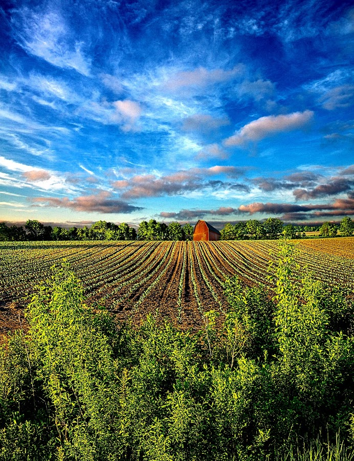 A Perfect Beginning by Phil Koch - Landscapes Prairies, Meadows & Fields ( summer. spring, vertical, wisconsin, natural light, photograph, environement, farmland, yellow, phil koch, leaves, spring, sun, photography, love, farm, nature, autumn, horizons, flowers, inspired, clouds, office, orange, green, twilight, agriculture, horizon, scenic, morning, portrait, field, red, winter, seasons, blue, national geographic, sunset, serene, peace, fall, meadow, earth, sunrise, landscapes, floral, inspirational,  )