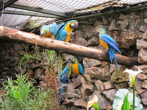 Photo: More macaws