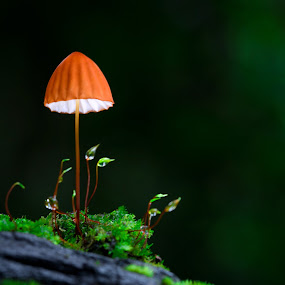 In The Light by Tuan Pham - Nature Up Close Mushrooms & Fungi ( forest, mushroom )