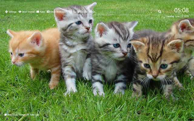 Kittens Wallpaper HD New Tab Theme©