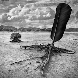 Featherland by Dariusz Klimczak - Digital Art Places ( surreal, feather, art, fantasy, nature, nest, roots, imagination, square, dream, monochrome, wood, klimczak, landscape, kwadrart )