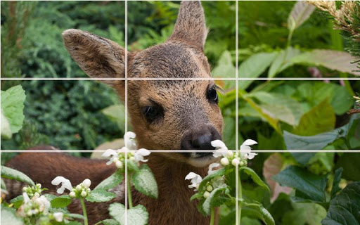 Puzzle - Forest animals screenshot 7