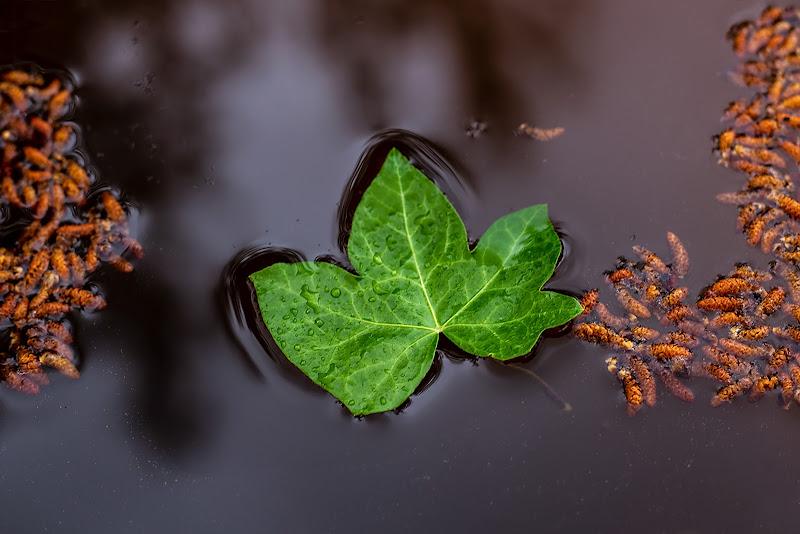 autunno di nicole_racugno