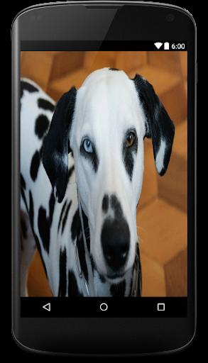 大麦町犬动态壁纸
