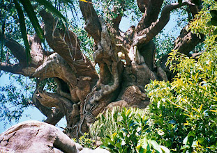 Photo: Disney's Animal Kingdom is so lush with foliage, the colors just pop. The Tree of Life, which houses It's Tough To Be A Bug, is lush and green and 100% man made. There are many details that should be observed from up close.
