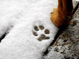 Image result for dog winter paws