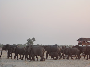 Photo: That's a huge parade of elephants.