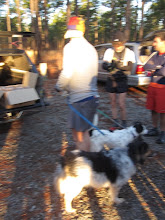 Photo: Jimbo has Wilbur and Sara ready to go.  Wilbur and Sara completed there first ultra distance today.