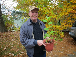 Photo: Rocket Riley with one of his healthy saplings.