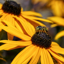 Visitor by Todd Reynolds - Flowers Flower Gardens