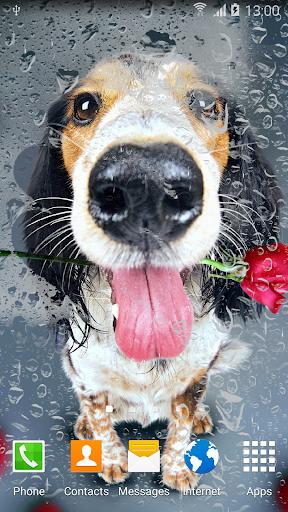 Sakura Falling Live Wallpaper Downloads Download Animals Cute Live Wallpaper Google Play Softwares