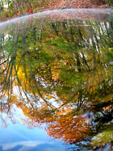 Photo: Fisheye reflection of autumn trees in a lake at Eastwood Park in Dayton, Ohio.