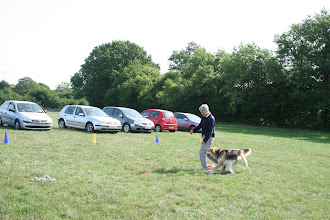 Photo: DogBasics Fun Day 2013 - Anne and Gretl Golden X in the Contact Slalom