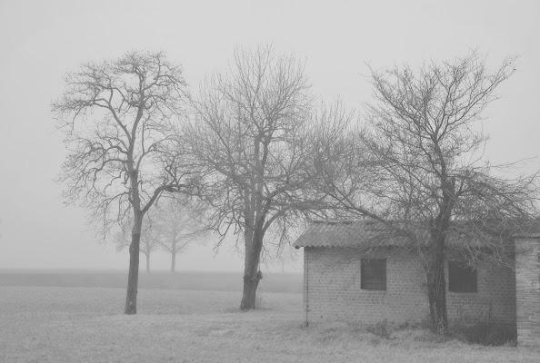 Nebbia affascinante e misteriosa di vaiolet