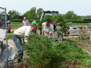 Photo: coniferenhaag wordt ingeplant