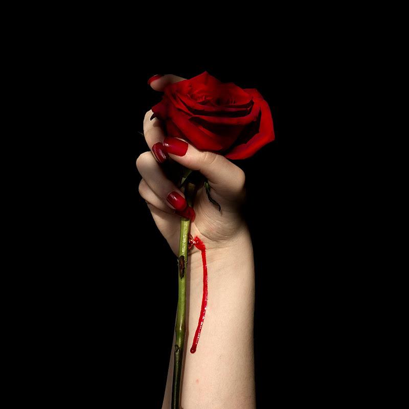 Non c'è rosa senza spine di Dariagufo