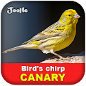 Canary singing icon