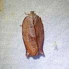 Leafrolling Bellmoth