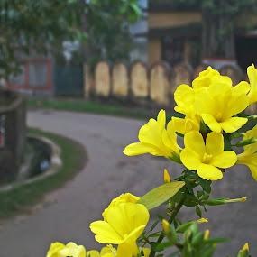 by Mriganka Sekhar Halder - Nature Up Close Flowers - 2011-2013