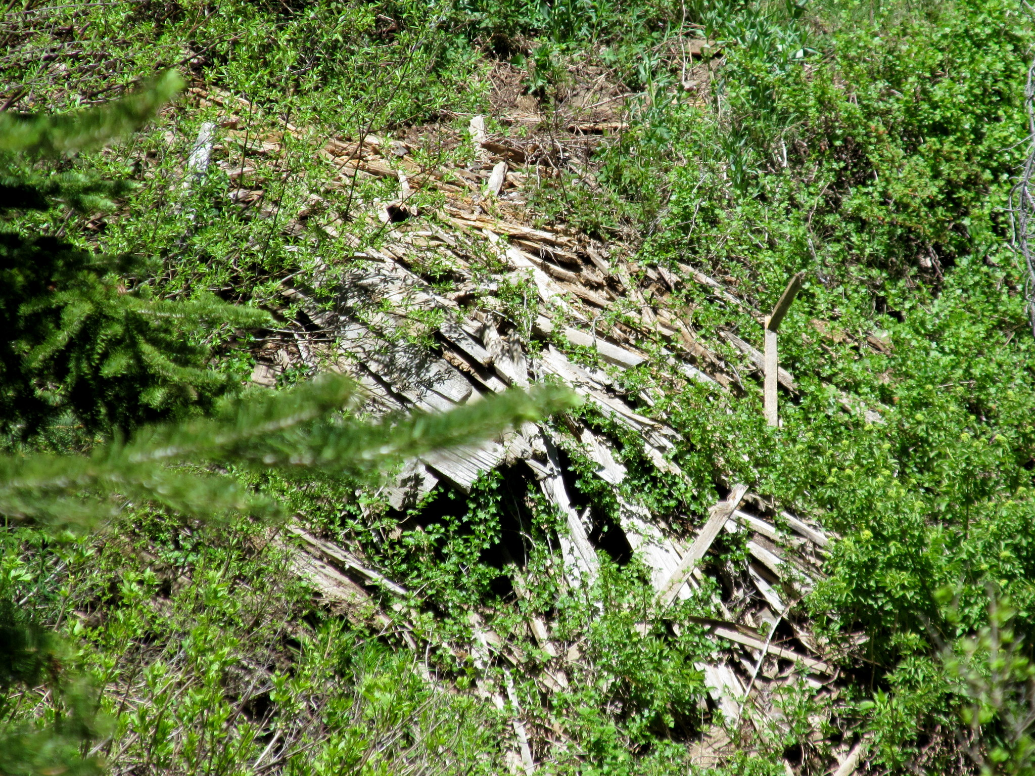 Photo: Another large scrap lumber pile
