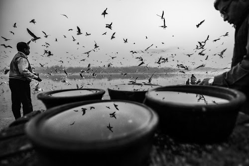 The infinity pools  by Kallol Bhattacharjee - Black & White Street & Candid ( winter, boat, nikon, birds, gulls, river )