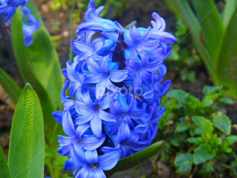 by Eleanor McCabe - Flowers Flower Gardens