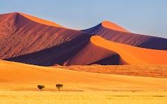 2 bomen in lichtgele woestijn met oranje bergen