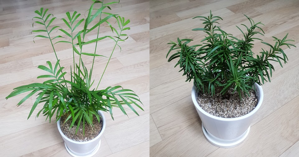 txt soobin plants yaja herb