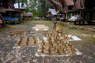 Photo: Pueblo tradicional Toraja  Sulawesi  Domingo 22 de marzo de 2015