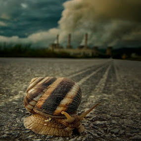 The Snail Tried To Run Away by Gregory Dallis - Animals Other ( snail west macedonia power dallis dallis greece )