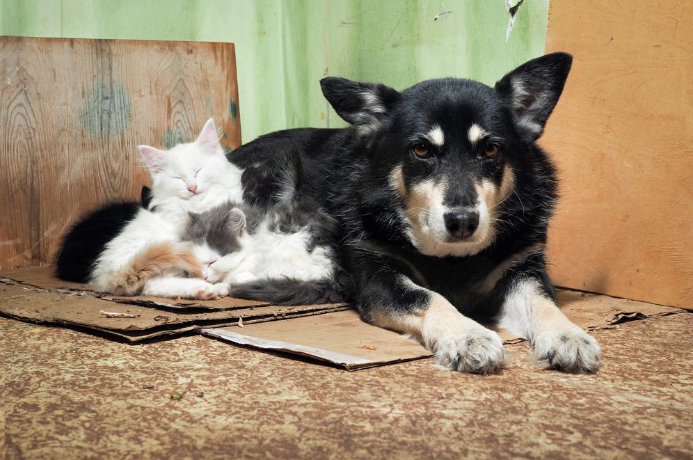 Quyết tâm trở thành bác sĩ thú ý vì tình thương với chó mèo hoang - Ảnh 1