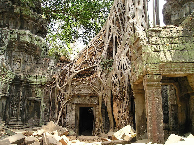 Roots cover a temple entrance at Angkor Wat in Cambodia.