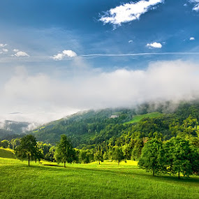 Morning sun. by Denis Klicic - Landscapes Forests ( nature, grass, green, slovenia, forest, landscape, morning, sun )