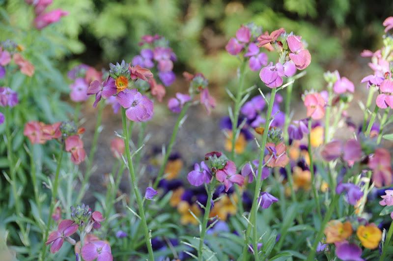 Photo: Wall Flower
