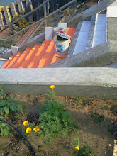 Photo: Sixth full day of work (November 1, 2013): Self-seeded California poppy blooming at the top of the Hidden Garden Steps (16th Avenue, between Kirkham and Lawton streets in San Francisco's Inner Sunset District) one day after the poppy incorporated into the 148-step ceramic-tile mosaic designed and created by project artists Aileen Barr and Colette Crutcher was installed lower onsite. More than 80 pieces of the mosaic are now in place, and tread-tile installation (background of photo) is in progress. For more information about this volunteer-driven community-based project supported by the San Francisco Parks Alliance, the San Francisco Department of Public Works Street Parks Program, and hundreds of individual donors, please visit our website at http://hiddengardensteps.org.